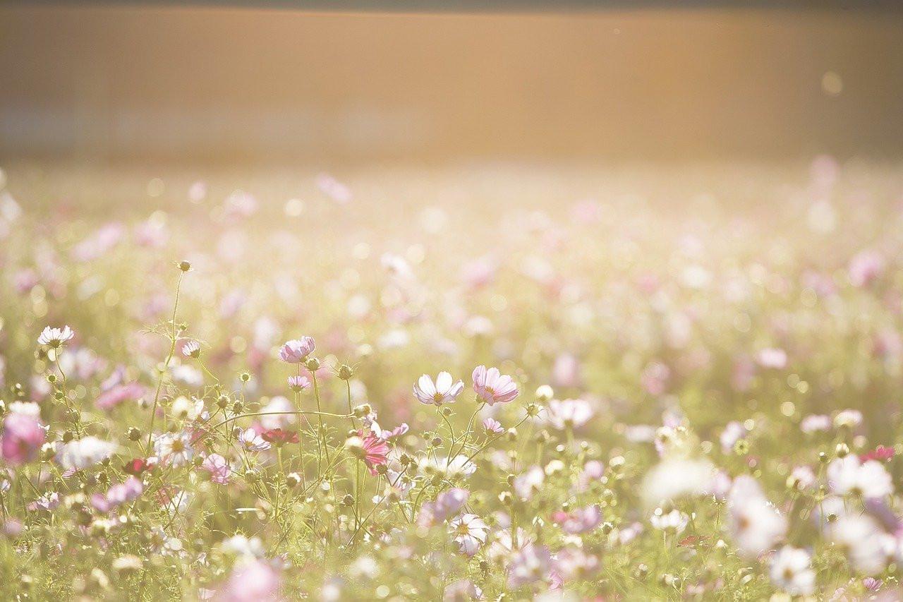Chaleur, allergies… Comment bien aérer son logement en été?