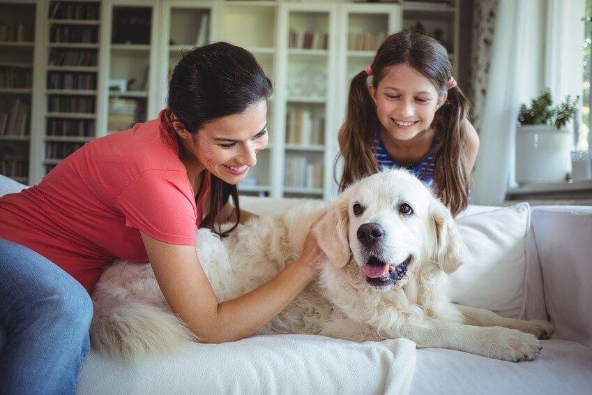 Comment garder votre maison propre avec un animal
