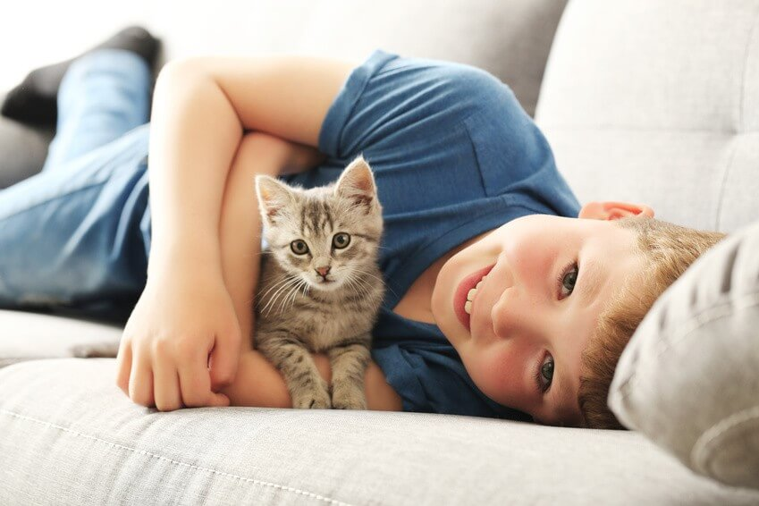 11 vraies astuces contre les poils de chat dans la maison