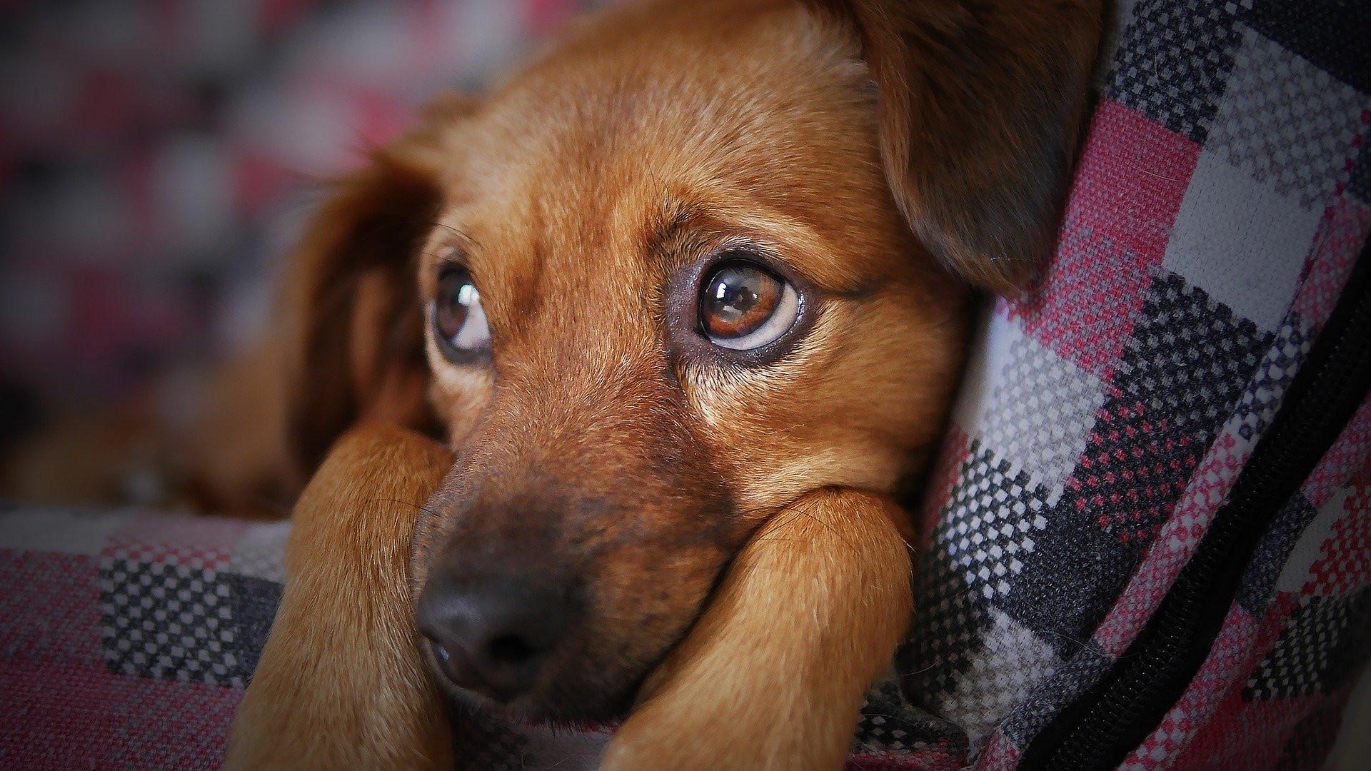 Éliminez les odeurs d'animaux de votre maison!
